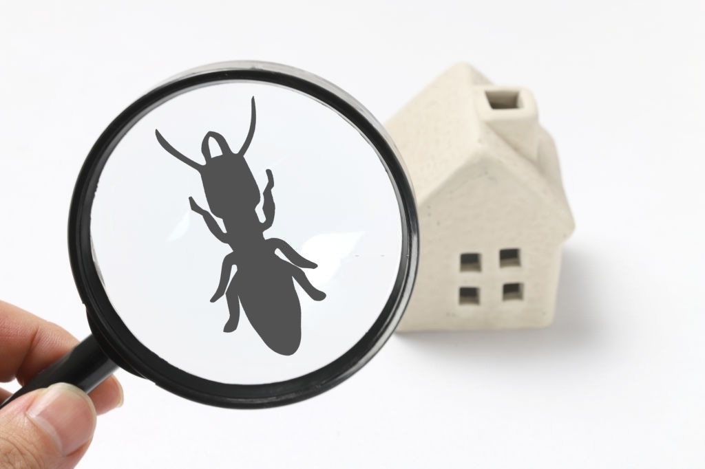 ant-free-home